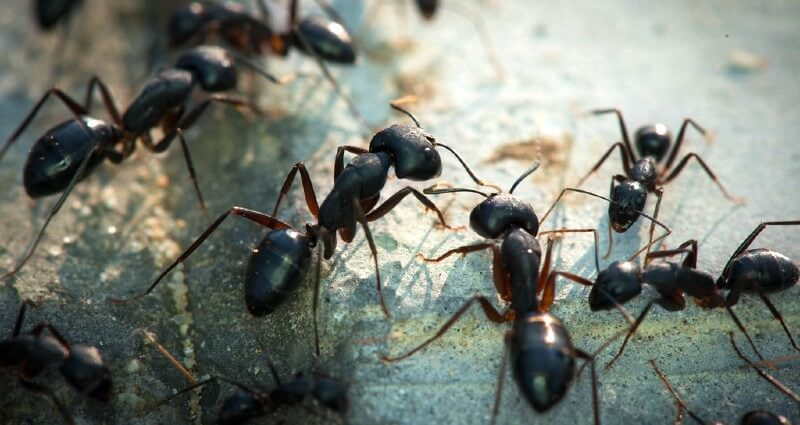 ant control services in Ontario